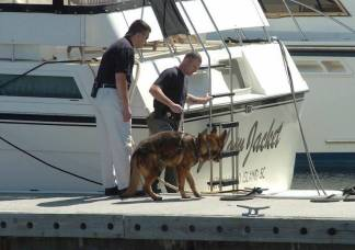 Investigators from the Beaufort County Sheriff's Department search The Yellow Jacket with the aid of a K9, hoping to find some trace of the missing couple who made it their part-time home.