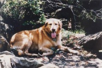 Taj, a golden retriever, accompanied Julie and Lollie during their Shenandoah trip and was found wandering the woods alone after their murder.
